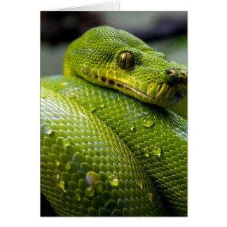 Python Snake Card
