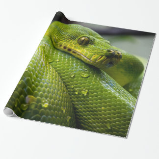 Python Wrapping Paper