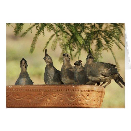 Quail Chicks Card