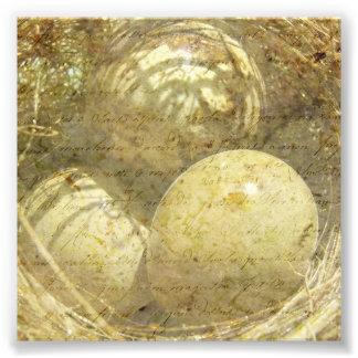 Quail Eggs Photographic Print