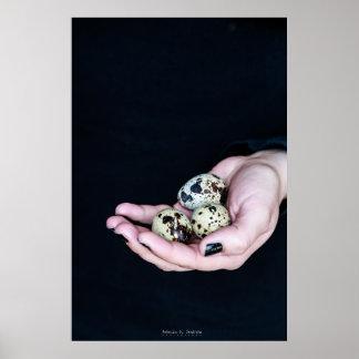 Quail eggs series poster