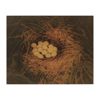 Quail Eggs Wood Print