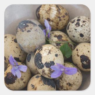 Quails eggs & flowers 7533 square sticker