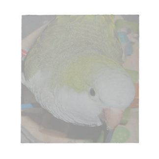 Quaker Parrot Notepads