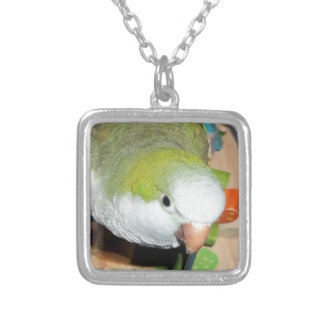 Quaker Parrot Silver Plated Necklace