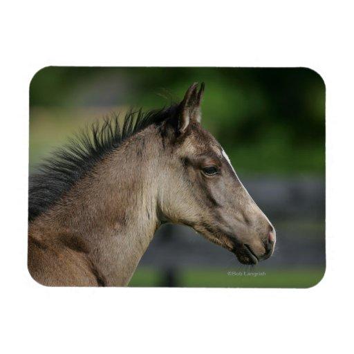 Quarter Horse Foal Headshot Rectangle Magnet