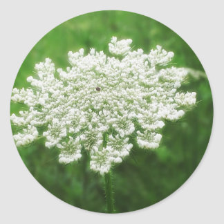 Queen Anne's Lace 1 (Wild Carrot) Round Sticker