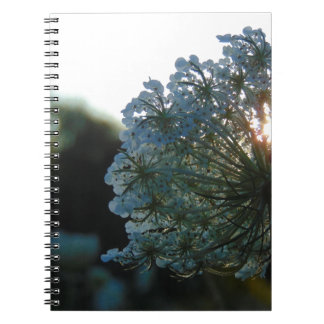 Queen Anne's Lace at Sunset Notebook