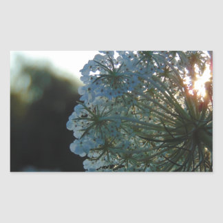 Queen Anne's Lace at Sunset Sticker