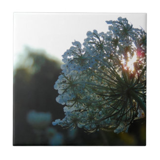 Queen Anne's Lace at Sunset Tile