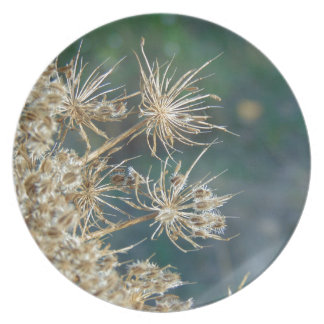 Queen Anne's Lace Close Up Dinner Plate