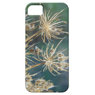 Queen Anne's Lace Close Up iPhone 5 Cover