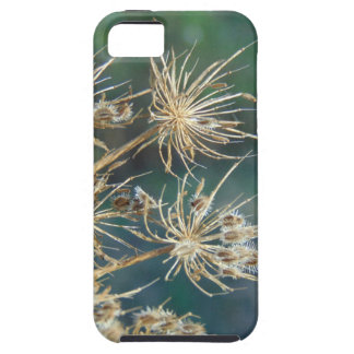 Queen Anne's Lace Close Up iPhone 5 Covers
