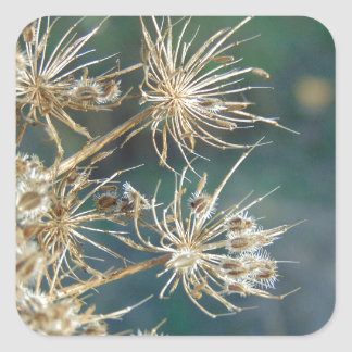 Queen Anne's Lace Close Up Square Sticker