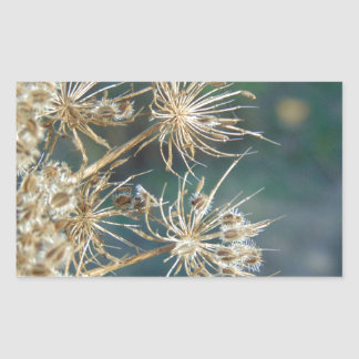 Queen Anne's Lace Close Up Sticker