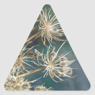 Queen Anne's Lace Close Up Triangle Sticker