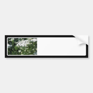 Queen Anne's Lace in a Field Bumper Sticker
