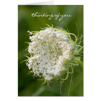 Queen Anne's Lace macro Card