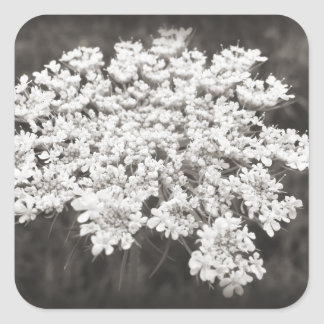Queen Anne's Lace Square Sticker