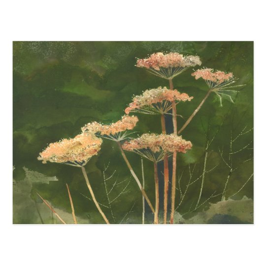 QUEEN ANN'S LACE by SHARON SHARPE Postcard