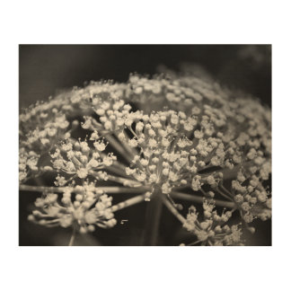 queen ann's lace wood canvases