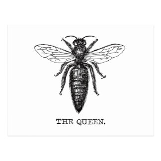 Queen Bee Black and White Illustration Postcard