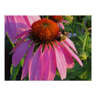Queen Bee On Purple Coneflower Poster
