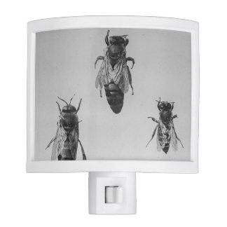 Queen Drone Worker Bee Keeping Apiology Apiarist Night Lights