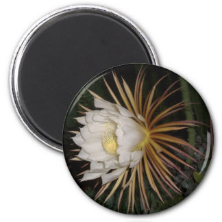 Queen Of The Night Cactus Flower 2 Inch Round Magnet
