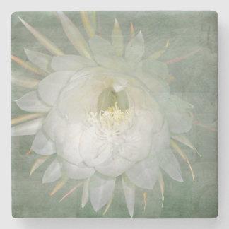 Queen Of The Night Flower - Epiphyllum oxypetalum Stone Coaster