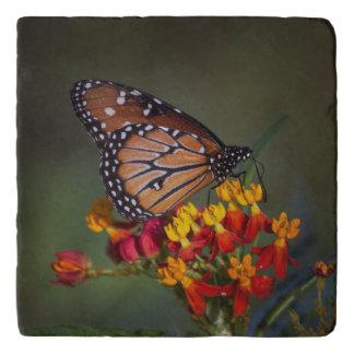 Queen on tropical milkweed trivet