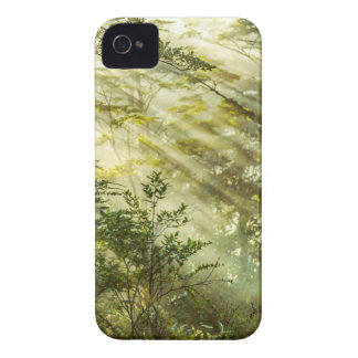 Queulat Park, Patagonia Forest Landscape, Aysen, iPhone 4 Cover