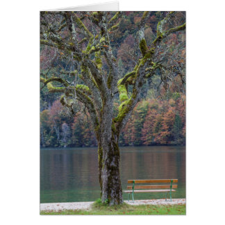 Quiet bench along a lake, Germany Card