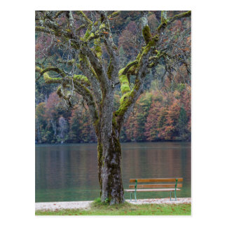 Quiet bench along a lake, Germany Postcard
