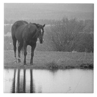 Quiet Reflectionz ~ Horse Photo Tile