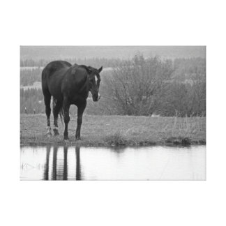 Quiet Reflectionz ~ Horse Print