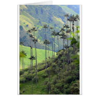 Qunidio wax palms in Cocora Valley Card