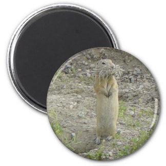 R0001 Gopher 2 Inch Round Magnet