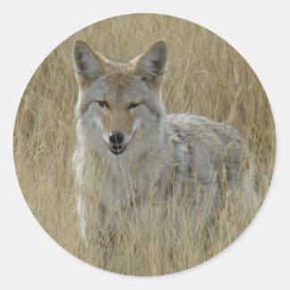 R0002 Coyote Classic Round Sticker