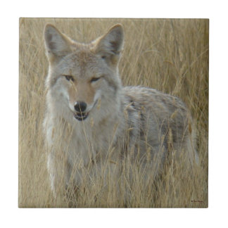 R0002 Coyote in Tall Grass Tile