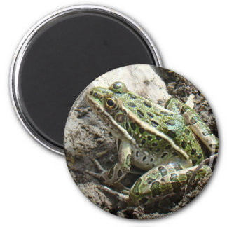R0003 Leopard Frog 2 Inch Round Magnet