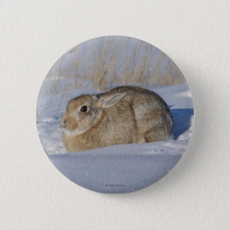 R0005 Cottontail Rabbit 2 Inch Round Button