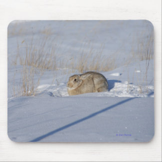 R0005 Cottontail Rabbit in Snow Mouse Pad