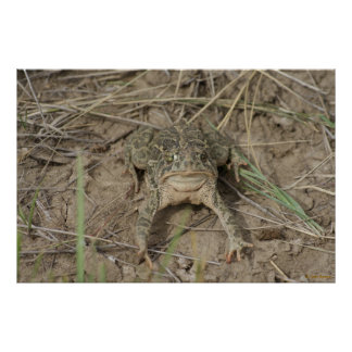 R0010 Prairie Toad Poster