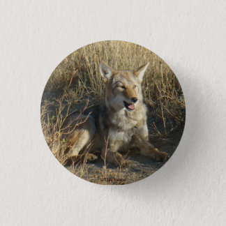 R0018 Coyote Laying 1 Inch Round Button