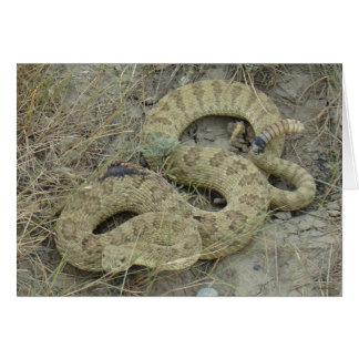 R0020 Prairie Rattlesnake Card
