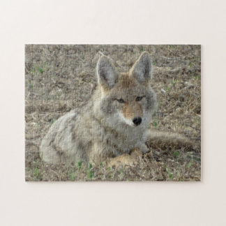 R0022 Coyote Laying Puzzle