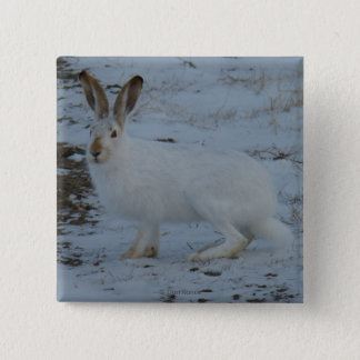 R0023 Snowshoe Hare 2 Inch Square Button