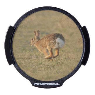 rabbit-16.jpg LED car decal