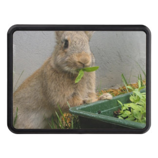 rabbit-20.jpg tow hitch covers